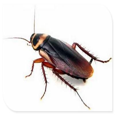白蚁住进四会市居民家中 灭蚁应该怎么做