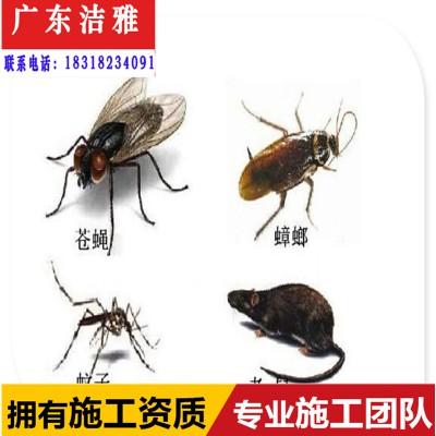 高要区白蚁防治中心/肇庆高要区房屋白蚁预防工程